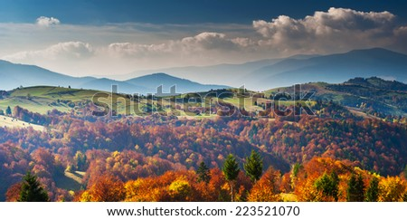 Tree with yellow leaves in the mountains