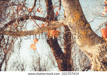 Tree without leaves in autumn - stock photo
