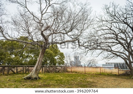 Tree without leaves in the park on spring season
