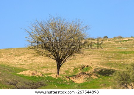 Tree  without leaves on a grassy meadow - stock photo