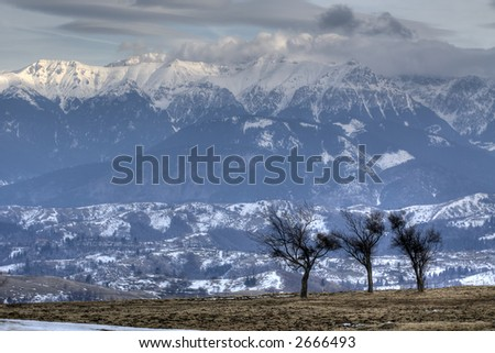 Trees admiring the mountains in the winter - stock photo