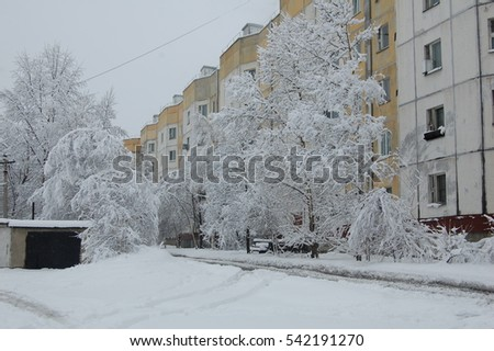 Trees after snowfall.