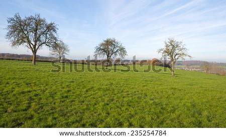 Trees along a sunny meadow at fall - stock photo