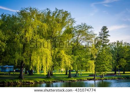 Trees along Lake Ontario at Centre Island, in Toronto, Ontario. - stock photo