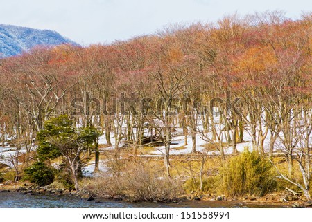 Trees along the Lake Ashi at Japan / Deciduous trees in winter. - stock photo
