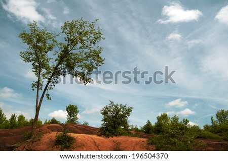 Trees and a desert under a blue sky.