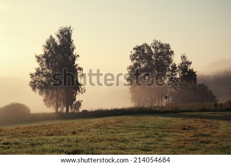 Trees and a meadow in dense morning fog