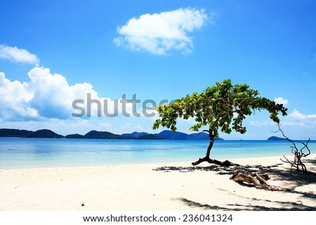 Trees and beach at Koh Chang Island,Thailand - stock photo