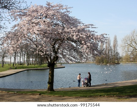 Trees and blossom at Pontefract Park Yorkshire