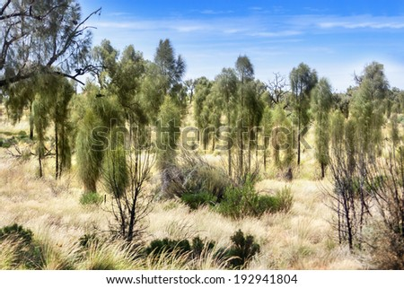 Trees and dry grass in Australian outback on a hot day - stock photo
