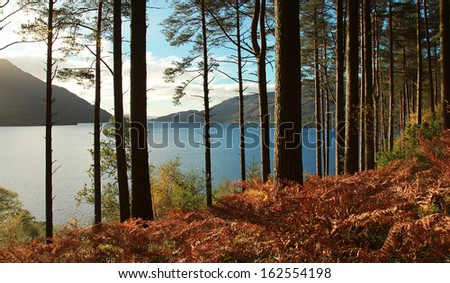 Trees and fern during autumn in front of Loch Lomond, Scotland, UK. - stock photo