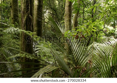 Trees and ferns in tropical jungle - stock photo
