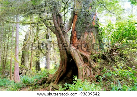 Trees and foliage in rain forest Pacific Rim National Park, British Columbia Canada - stock photo