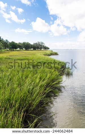 Trees and grass along a wetland marsh - stock photo