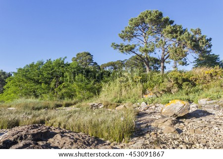 Trees and grass on the coast of Arousa Island