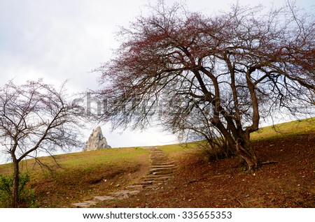 Trees and large stone on a hill