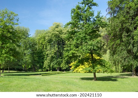 Trees and meadow / Trees - stock photo