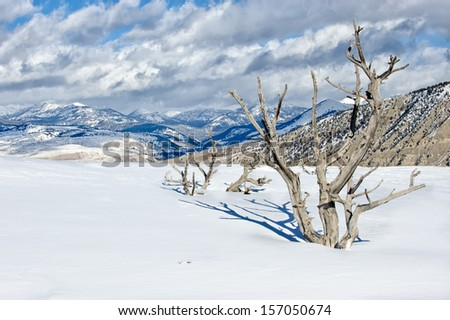 Trees and Mountains from Mammoth Hot Springs - stock photo