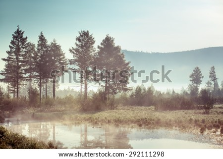 Trees and reeds near the misty lake - stock photo