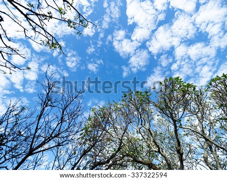 trees and sky - stock photo
