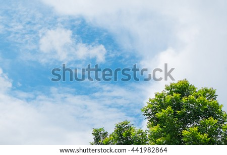 Trees and sky - fresh green leaves with sky - White cloud in the blue sky -Skies background - stock photo
