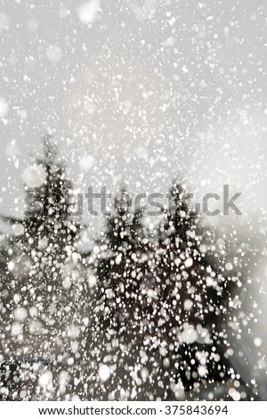 Trees and snow - stock photo