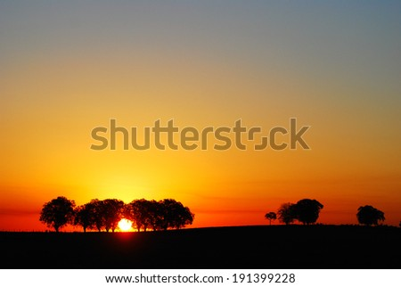 trees and the sun - stock photo