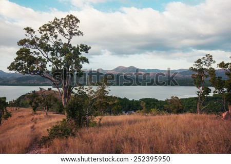 Trees and vegetation on a hill in a tropical climate - stock photo