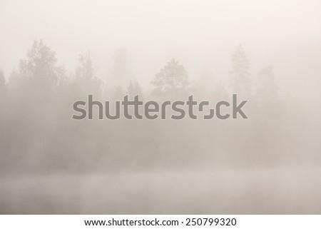 Trees at lakeside at foggy morning - stock photo