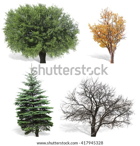 Trees at spring or summer, autumn and winter seasons,  isolated on white - stock photo