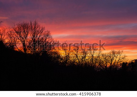 Trees at sunset on cloudy sky - stock photo