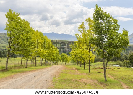 Trees become yellow at the end of summer - stock photo