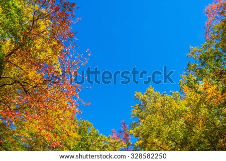 Trees beginning to change color in earl Fall in Long Valley New Jersey. - stock photo