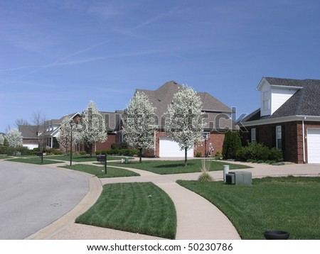 trees blooming along a street in a new wealthy subdivision - stock photo