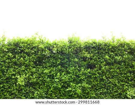 Trees bushes - stock photo