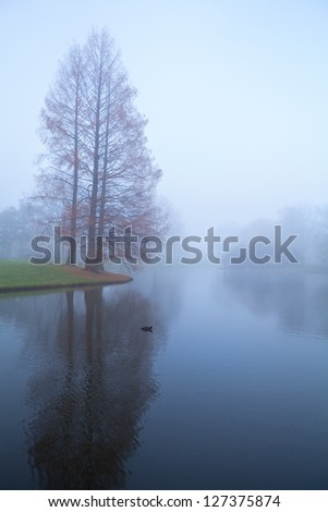 trees by lake in dense morning fog - stock photo