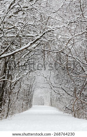 Trees covered by snow around forest walkway in winter time - stock photo