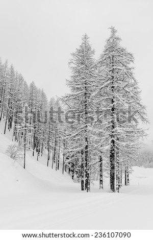 Trees covered by snow in a forest during a cloudy day, relaxing and lonely atmosphere due to black and white conversion - stock photo