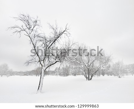 Trees covered by snow, in the mist of winter blizzard.