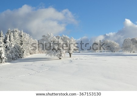 Trees covered in snow in the mountains against a clear blue sky - stock photo