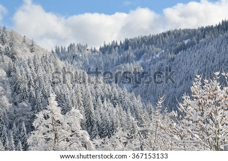 Trees covered in snow in the mountains against a clear blue sky
