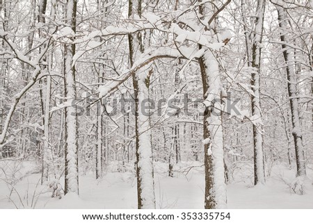 Trees covered with a layer of snow in the forest