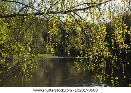 Trees covered with fresh herbs in spring on the river bank