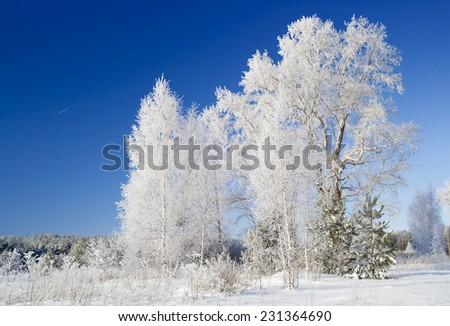 Trees covered with hoarfrost in bright winter day. Pure scintillating snow of January.  - stock photo