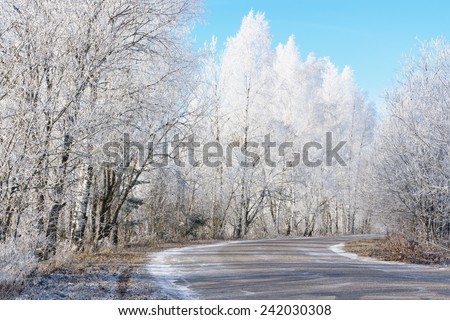 Trees covered with hoarfrost next to the road on a sunny frosty day - stock photo