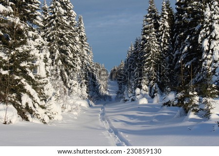 Trees covered with snow in Sunny weather. Winter day - stock photo