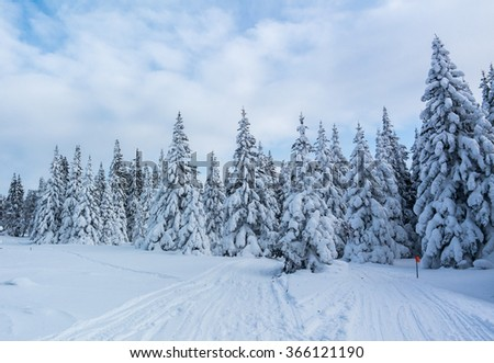 Trees covered with snow in the mountains