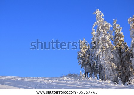 trees covered with snow on sunny winter day - stock photo