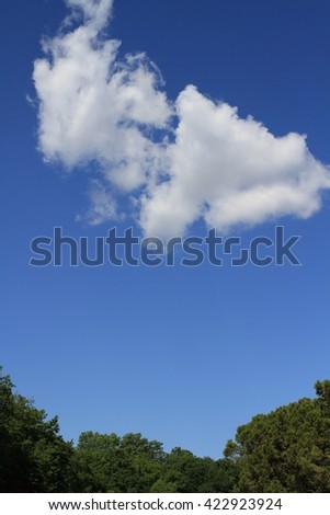 trees forest under the white clouds on a sunny day - stock photo