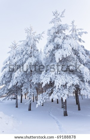 Trees full of snow